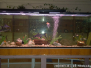 Školské akvárium - 11.11.2016
