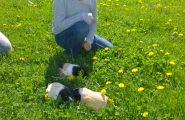 Jarné počasie vylákalo na školské futbalové ihrisko nie len žiakov z Chovateľského krúžku, ale aj ich zvieratá, pretože 19. apríla […]