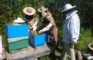 Žiaci Včelárskeho krúžku si trúfli aj na zakladanie medníkov. Keďže túto činnosť realizovali už aj minulý rok, stačilo sa len […]