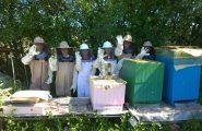 Druháci z našej školy boli zvedaví na školské včely, preto v pondelok 7. mája 2018 aj s ich triednou pani […]