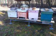Touto cestou vyjadrujem poďakovanie nášmu pánovi školníkovi Jánovi Krnáčovi za zhotovenie kvalitného pevného podstavca pod úle v našej školskej včelnici. […]